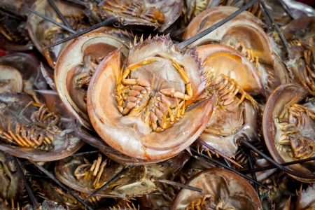 Roasted Mangrove horseshoe crab Stock Photo