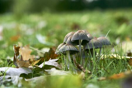 Mushrooms on green meadow in the autumn
