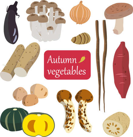 illustration of autumn vegetables collection 向量圖像