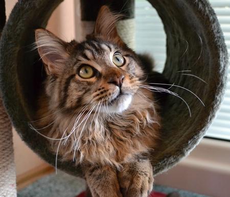 climbing frame: Ritratto di un simpatico gatto sdraiato sul telaio di arrampicata