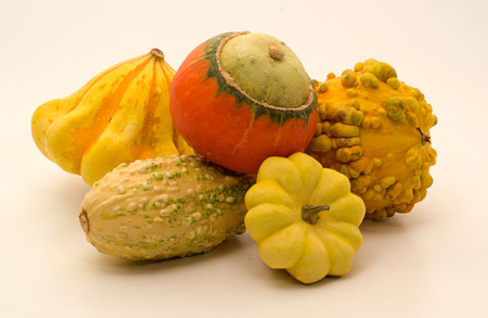 colorful still life: Still life with natural colorful decorative pumpkins