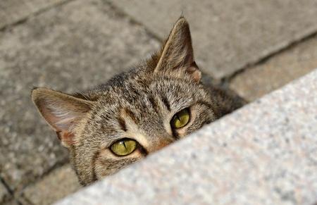 cute tabby kitten hiden behind flower pot Stock fotó