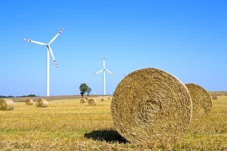 bioenergy: Bioenergy  Stock Photo