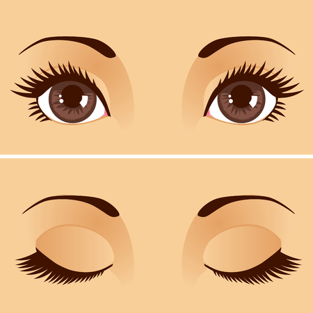 Closeup detail illustration of beautiful female brown eyes with eyelids open and closed Иллюстрация