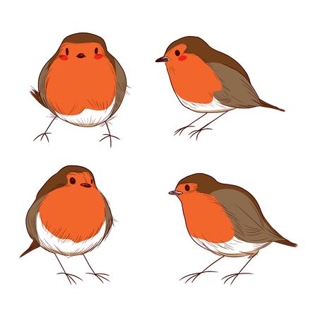 robin bird: Set of different hand drawn color cute robin birds
