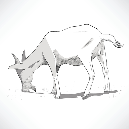 feed back: Hand drawn black and white lineart illustration of a goat grazing Illustration