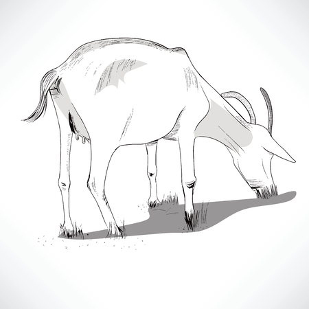 feed back: Black and white lineart illustration of a horned goat eating grass