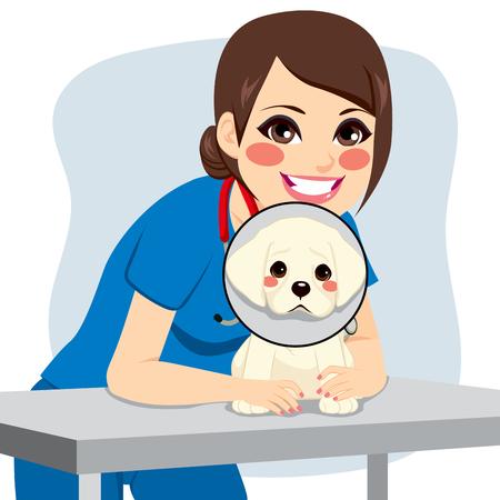 Cute little dog z stożek kołnierzy i szczęśliwy żeński lekarza weterynarii