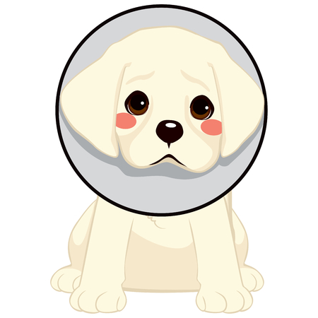 Cute little sad dog with cone of shame as injury protection