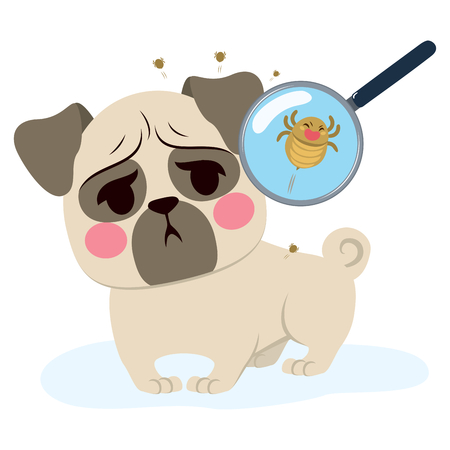 Dog having parasite infection and close up with magnifying glass Stock Vector - 81002711