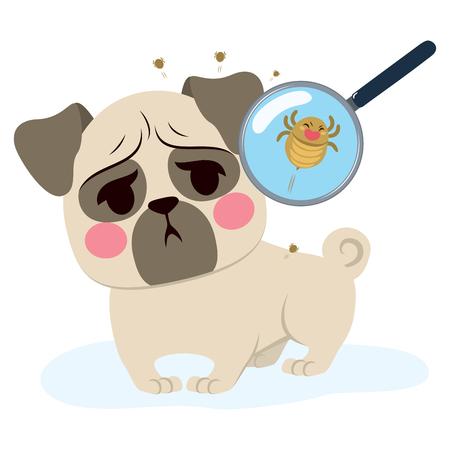 Hund, der Parasiteninfektion hat und mit Lupe hautnah Standard-Bild - 81002711