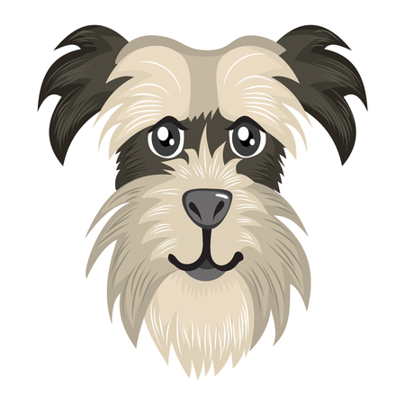 Cute little Schnauzer dog head portrait avatar