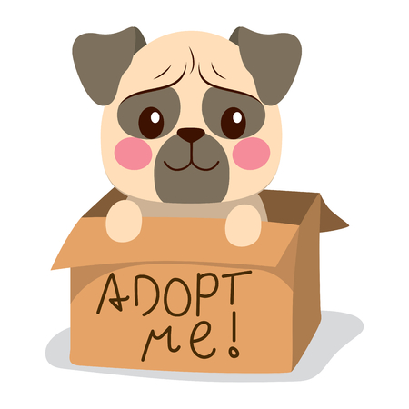 Cute little pug dog inside cardboard box with adopt me text.
