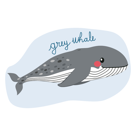 Large grey whale illustration Stock Vector - 96555007