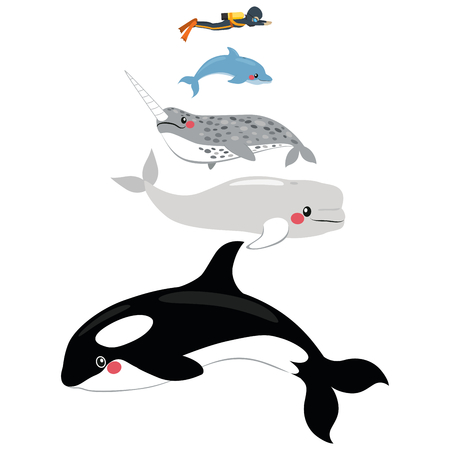 Infographic illustration of different marine mammal animal scale comparison size with human diver Illustration