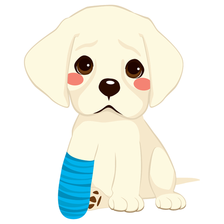 Young little sad dog sitting with broken leg and blue bandage