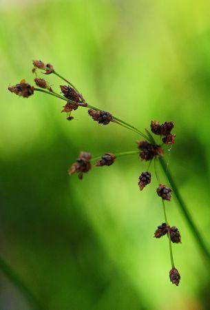 wilde bloem 1 Stockfoto