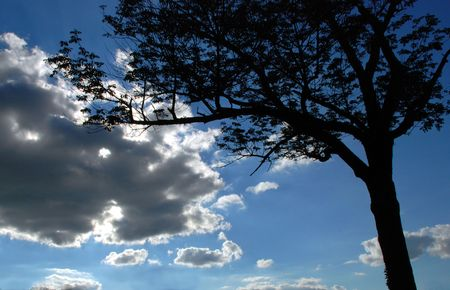 croud: clouds and Tree
