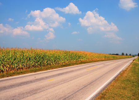 Campo de maíz Foto de archivo - 3514396