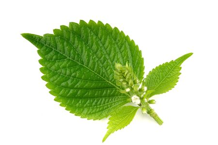 leaves Standard-Bild