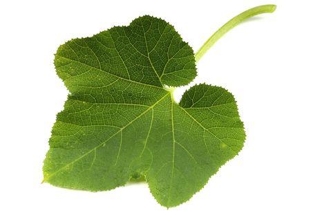 green leaf Reklamní fotografie