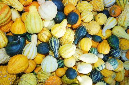 gourd photo