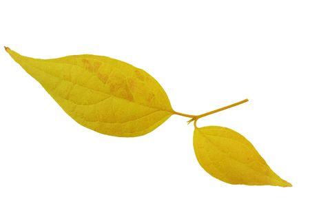 leaf Reklamní fotografie - 3761097