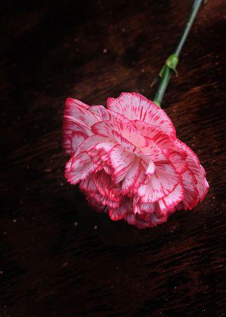 carnation on the old desk