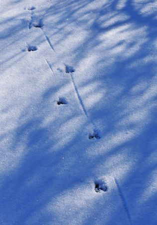 animal foot prints on the snow