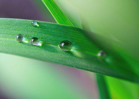 dew drop on the leaf