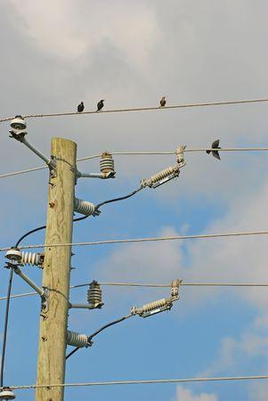 union familiar: las aves de la l�nea de alimentaci�n Foto de archivo