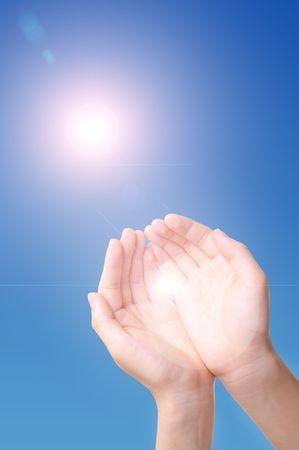 sunlight through the palm