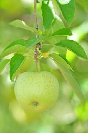 green apple Reklamní fotografie
