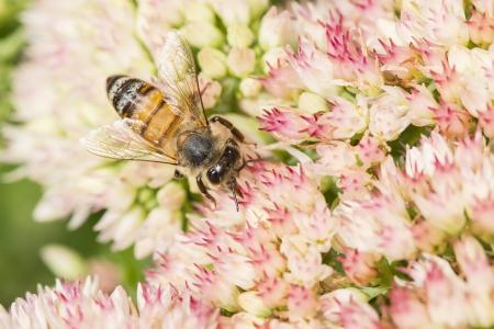 bee on the flower Reklamní fotografie