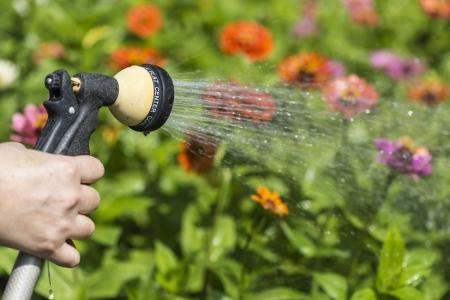 watering flower garden Reklamní fotografie