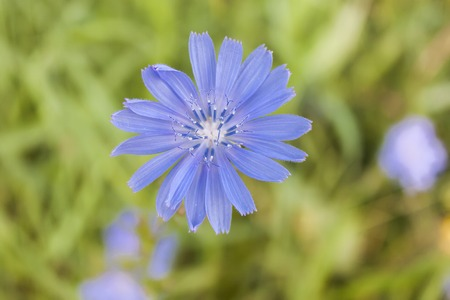 blue green background: Blue flower on green background close up Stock Photo