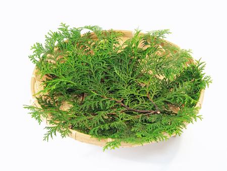Les feuilles de cyprès qui mettent la nourriture fraîche Banque d'images