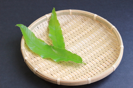 underlay: Leaves of oak, for underlay Stock Photo