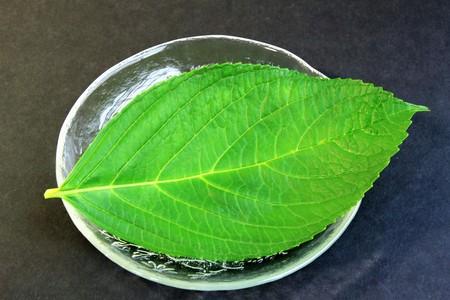 underlay: Leaf hydrangea on the dish