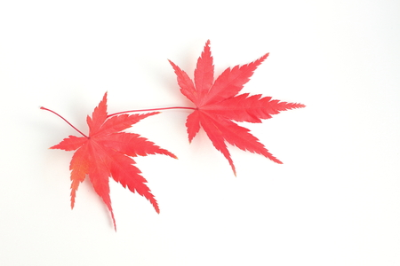 Leaf of maple that turned red. For coloring and cooking of dishes.