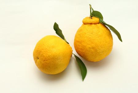 Japanese citrus fruit named