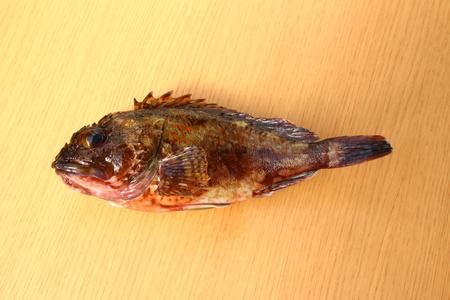 Scorpion fish (kasago) Фото со стока