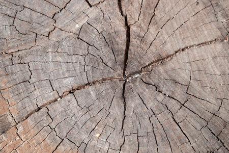 duramen: Heartwood