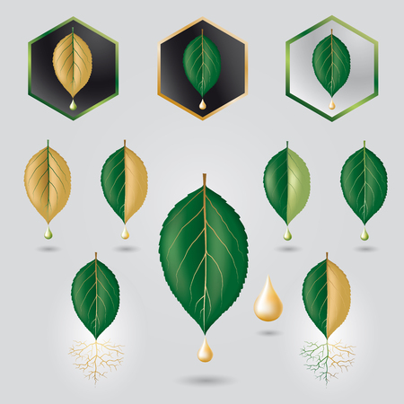 nervation: Leaf with precious sap icon set