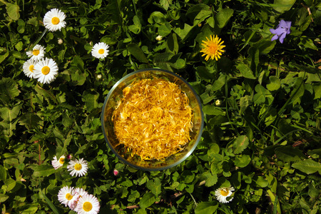 atmosphere: glass cup full of yellow dandelion petals in the middle of a garden