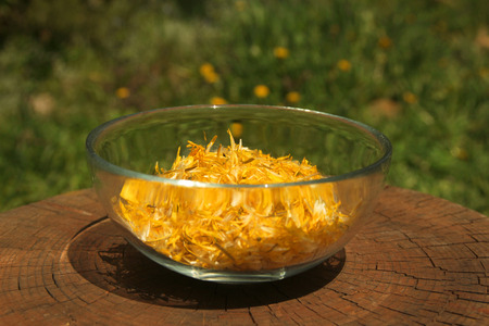 glass cup full of yellow dandelion petals in the middle of a garden