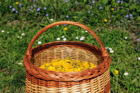 basket full of yellow dandelion flowers in the middle of a garden