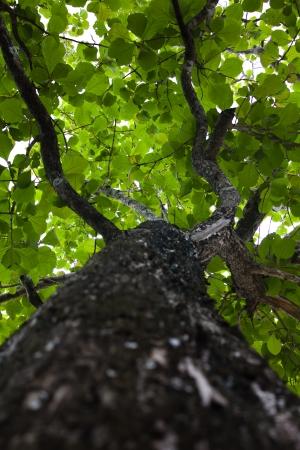 subtropical plants: Tree