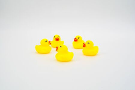Five mini yellow rubber ducks in circle facing each other. Isolated on white background. Meeting.