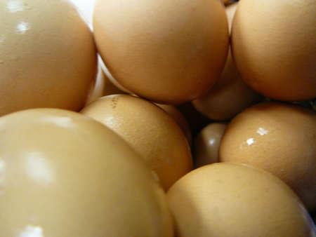 protien: Brown Eggs